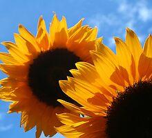 Sunflowers by Lin-Ann Anantharachagan