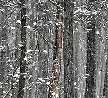 Winter Wonderland by dlwagner