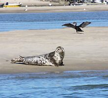 Resting Seal On a Sand Bar by Henry L. Sampson