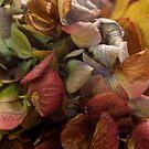 Hydrangea No. 5 by Sarah Butcher