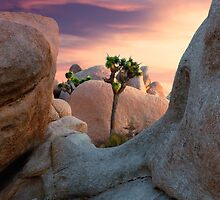 Joshua Tree NP by Cecil Whitt
