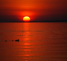 Ducks at Sunset by Diane Blastorah