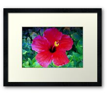Hibiscus happiness Framed Print
