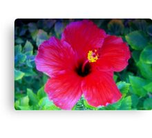 Hibiscus happiness Canvas Print