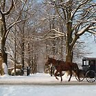 Horse and Buggy - Bird in Hand by Mark Van Scyoc