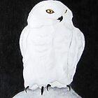 Snowy Owl by Nikki Fraser