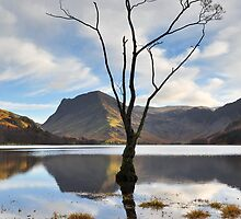 Buttermere Lone Tree by Jacqueline Wilkinson
