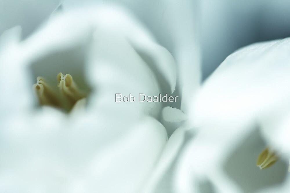 Dreamy pistil II by Bob Daalder