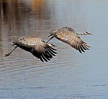0128111 Sandhill Cranes by Marvin Collins