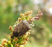 bugs by susiebug