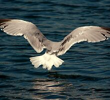 The Landing by DebYoung