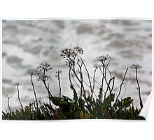 Wild Flora 0654 Poster