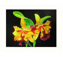 Fiery Orchids Art Print