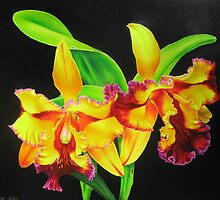 Fiery Orchids by lanadi