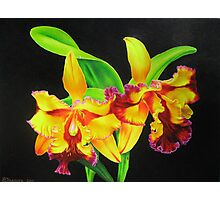 Fiery Orchids Photographic Print