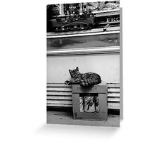 Grumpy Bodega Cat. Greeting Card