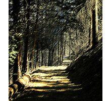 Venire per una passeggiata con me 2 Photographic Print
