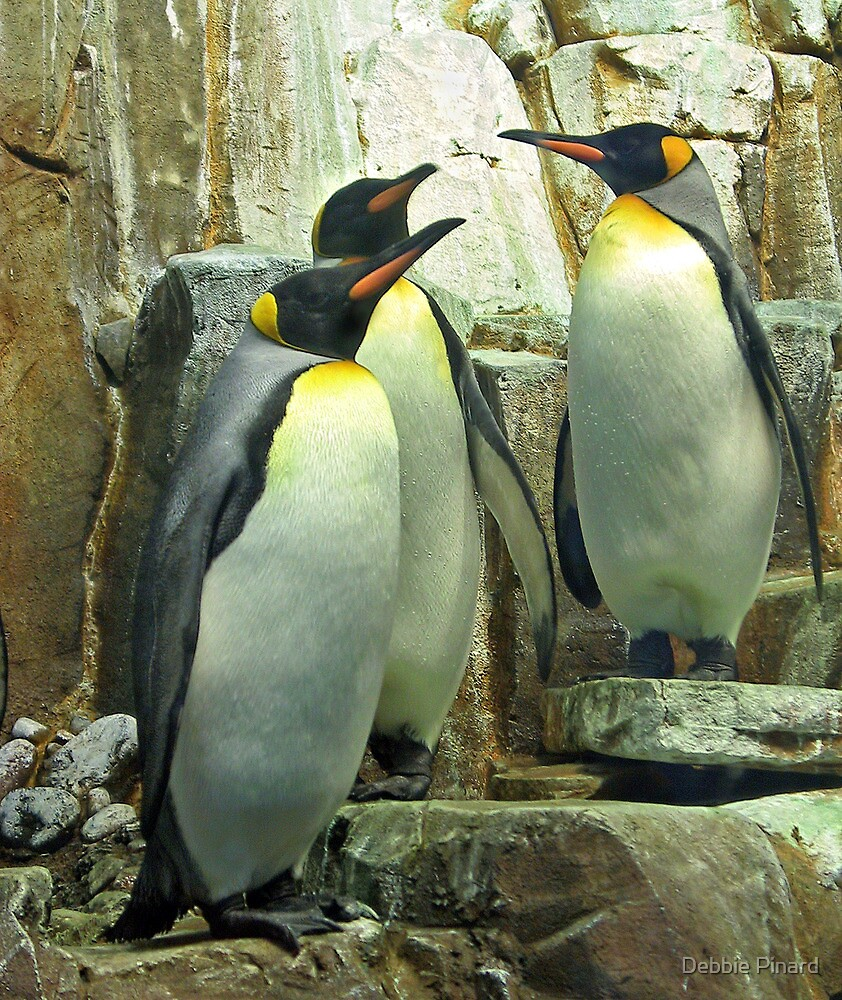 Penguins - Montreal Quebec by Debbie Pinard