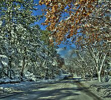 Along The Road by Diana Graves Photography