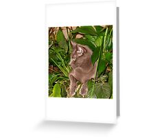 Potted Cat Greeting Card