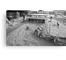 Bear Creek Saloon & Steakhouse, Montana Pig Races Canvas Print