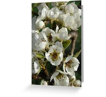 Blossoming Pears Greeting Card