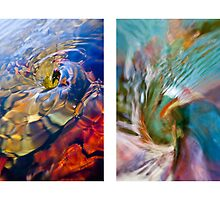 Whirlpool III (Spiral and Nautilus) by Steven David Johnson