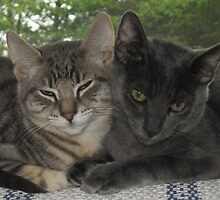 Cats Snuggling in Front of a Window by Margaret Donsbach