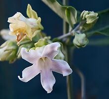 Vine Flower by sedge808