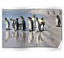 King Penguins - Faulkland Islands Poster