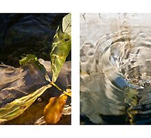 Whirlpool V (Life and Death) by Steven David Johnson
