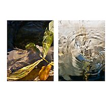 Whirlpool V (Life and Death) Photographic Print
