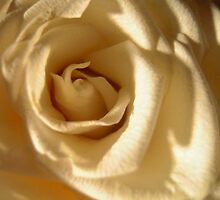 White Rose by Silvianna DiSalvo