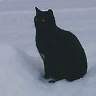 Blackie, Keeping Watch by MaeBelle