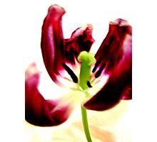 Valentine Photographic Print