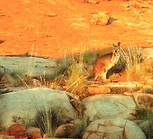 Bush Kangaroo by Christina Backus