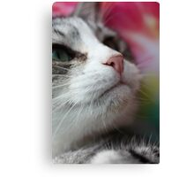 Looking up - Profile of a kitten Canvas Print