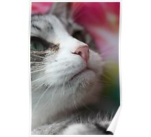 Looking up - Profile of a kitten Poster