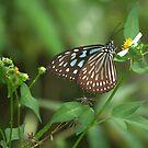 nectar-hungry I by Ryan Bird