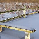 Rustic Bench and Fence by Brian Gaynor