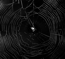 Spider b+w by AnnabelHC