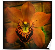 Antique Orchid Poster