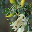 Native Fuschia in soft yellow by Lozzar Flowers & Art