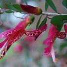 Native Fuschia in Pink by Lozzar Flowers & Art
