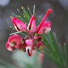 Native Grevillea by Lozzar Flowers & Art