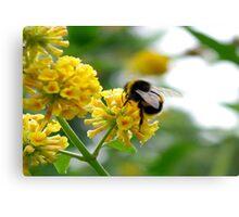 Bee #5 Canvas Print