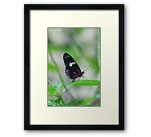 Butterfly #1 Framed Print