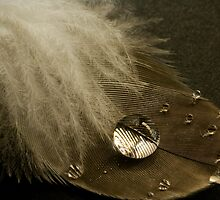 Feather Detail by Tony Cave
