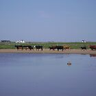 Cows - loch a phuil by xmarzipan