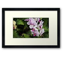 White and Pink Orchid (Photo) Framed Print